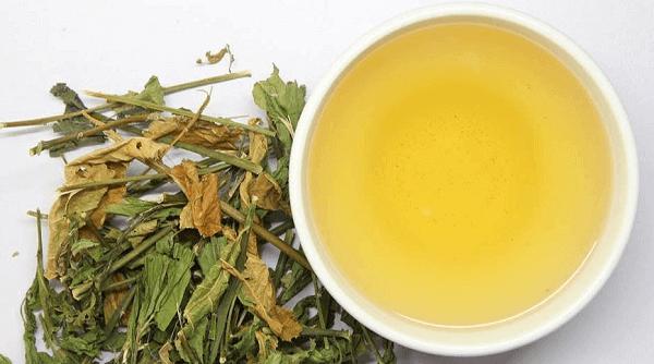 El anamú, excelente para aliviar los refriados y males como el cáncer