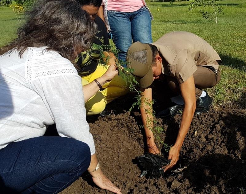Latiendo verde en Camagüey
