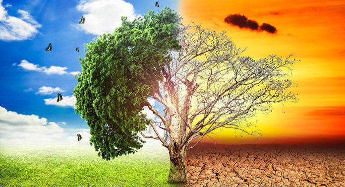 El calentamiento global no solo afecta al clima, nos hace más brutos