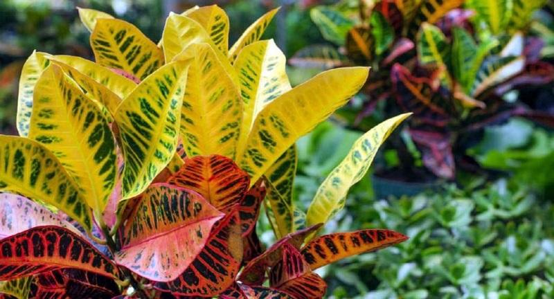 Las plantas merecen que se cuiden con esmero