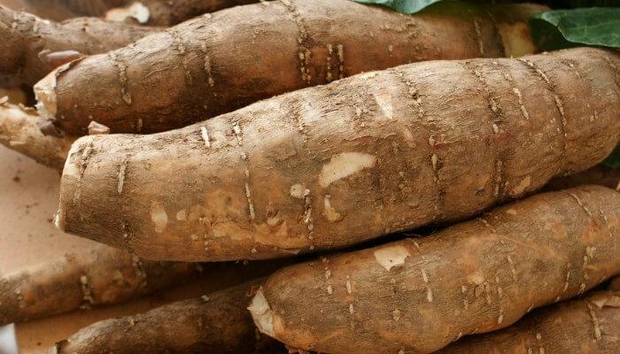 La yuca, rica en la cocina; mejor aún para cuidar la salud