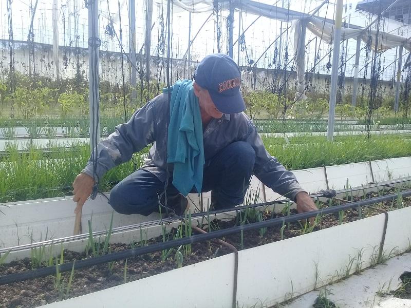 Celebran Día del Agropecuario en Venezuela