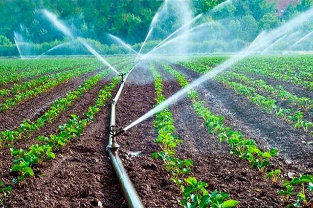 Matanzas, continuar la producción de alimentos bajo cualquier circunstancia