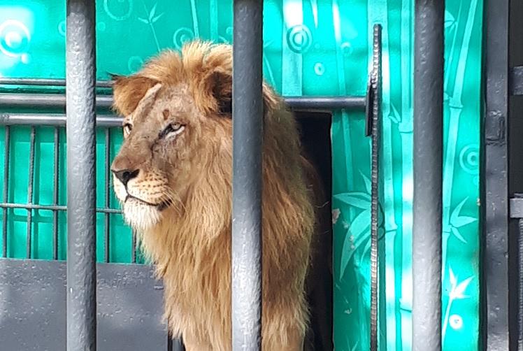 Al rescate del Zoológico pinero