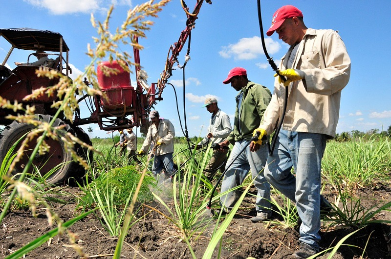 Cuban scientists suggest measures to address climate change in agriculture