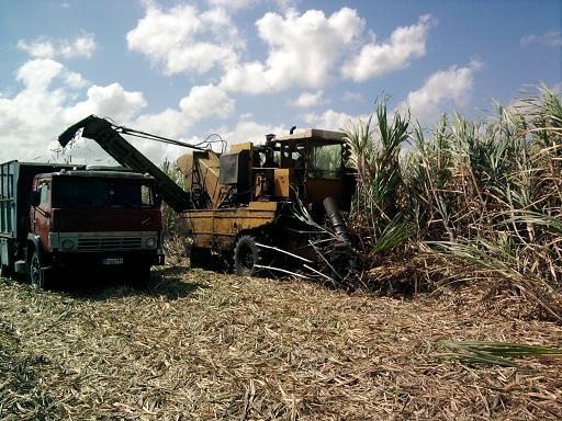 Crecerá la producción azucarera en Las Tunas