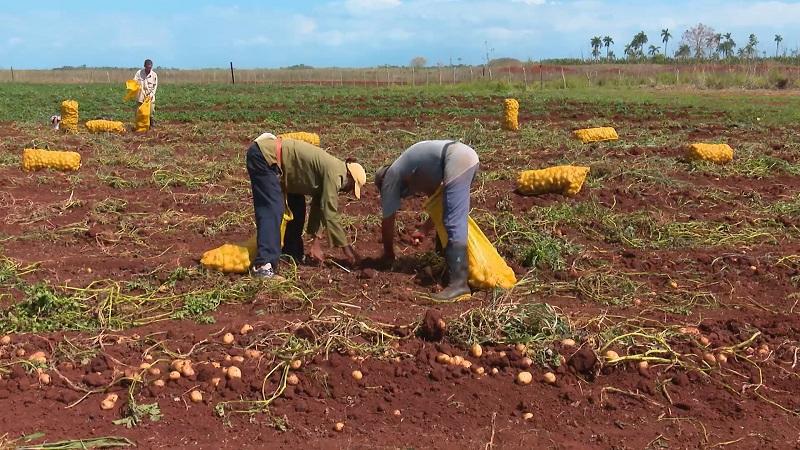 Debaten en Matanzas sobre agricultura