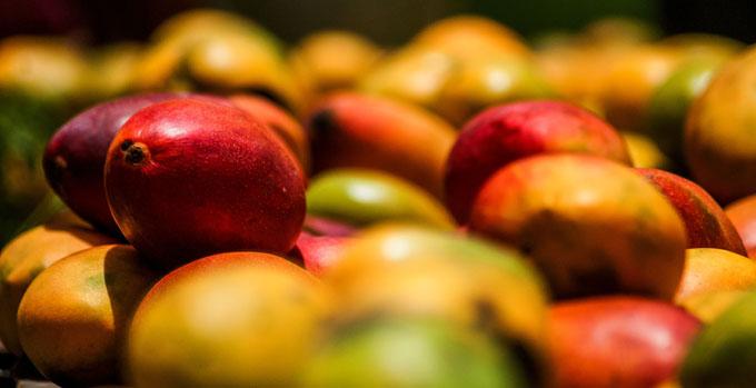 Fomenta Empresa de Conservas y Vegetales la exportación de sus producciones