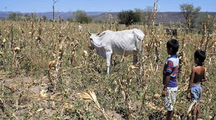 Agencia alimentaria de la ONU pide ayuda internacional para agricultores del Corredor Seco de Centroamérica