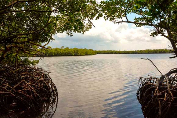 🎧 La ciencia en función de la adaptación al cambio climático y de la calidad de vida
