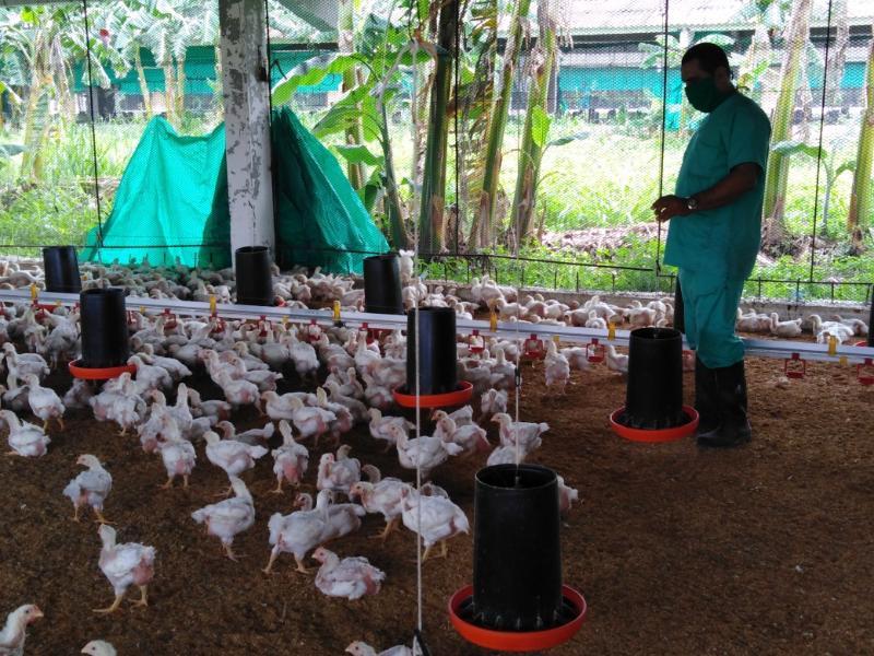 Avicultura tunera con mejores resultados