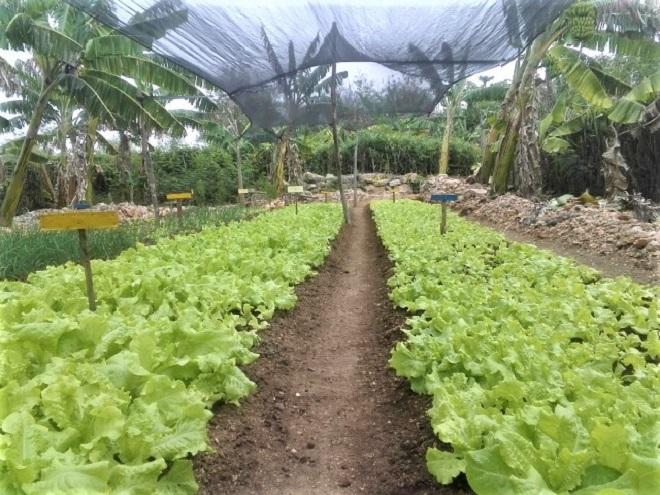 San Germán: Alimentos seguros, y en comunidad