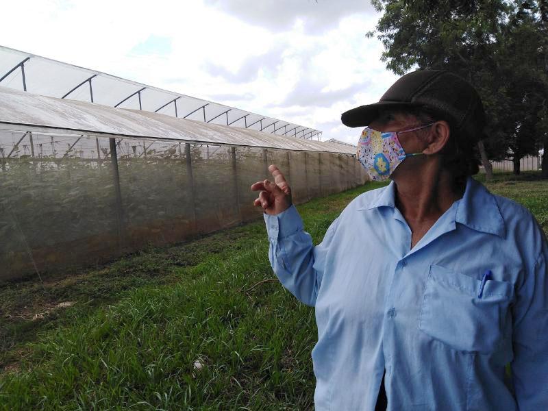 Nancy Yañez Silva Obrera agrícola.
