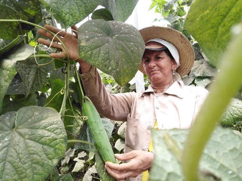 Marilin Torres González Obreraa, agricultora.