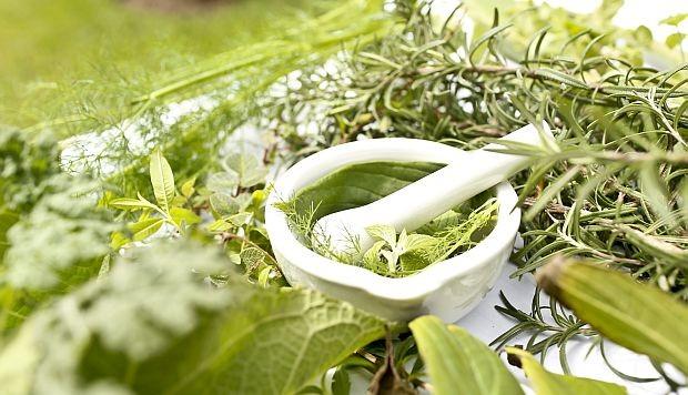 Sesiona en Cienfuegos Taller Nacional de Plantas Medicinales