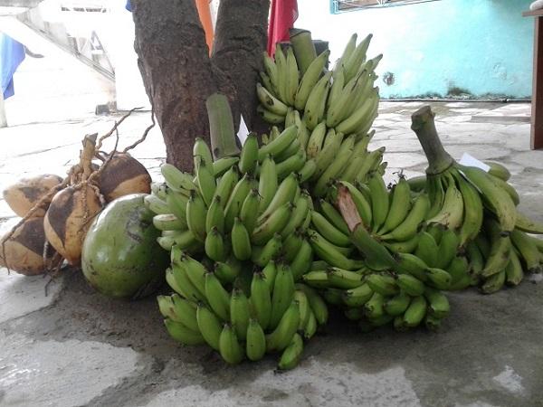 Los campesinos tuneros hacia la verdadera cultura agrícola