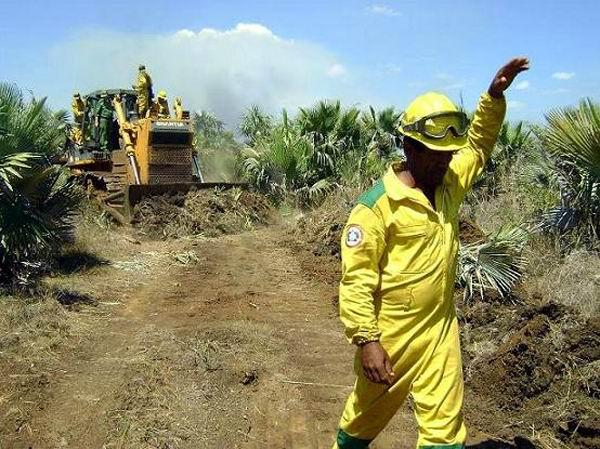 Desarrollan acciones en La Habana para evitar incendios forestales